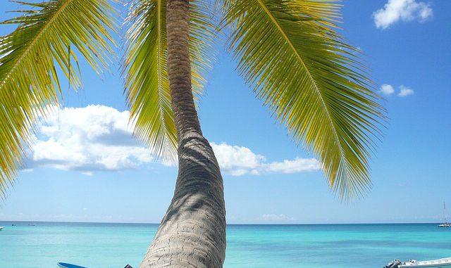 Frühbucher Angebote Isla Margarita - Palme