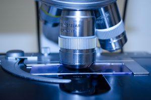 stammzellenforschung news