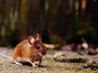 schädlingsbekämpfung lebenfalle maus & wühlmaus